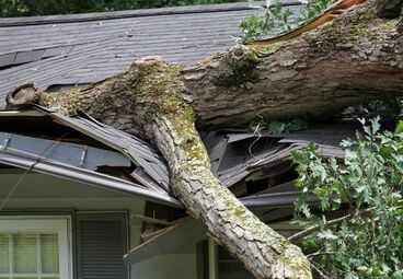 Will Homeowners Insurance Cover Tree Removal Deltona