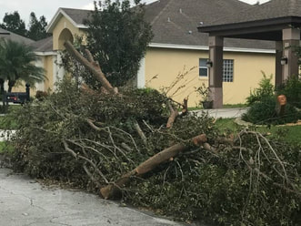 local tree removal deltona