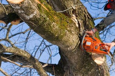 tree trimming service cost debary